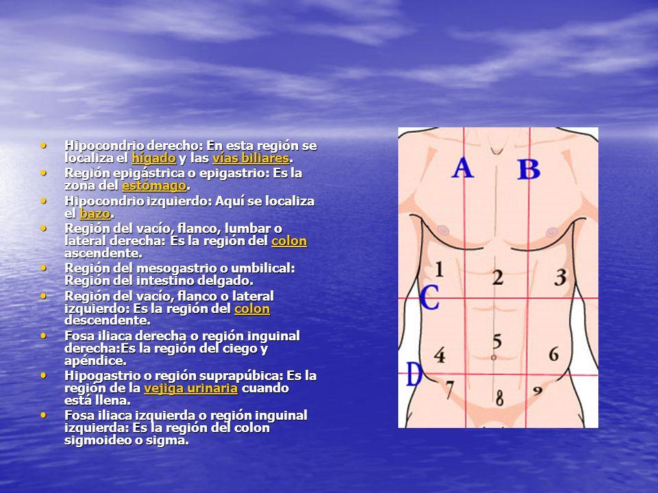 Hipocondrio derecho: En esta región se localiza el hígado y las vías biliares.