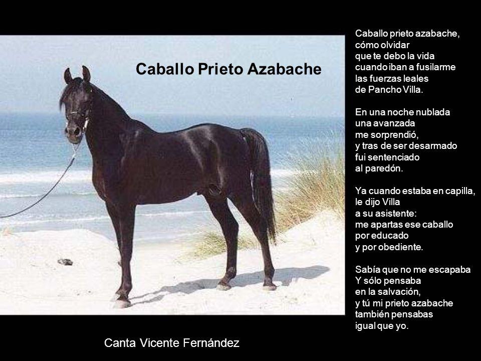 Descargar y ver online Caballo prieto azabache La tumba