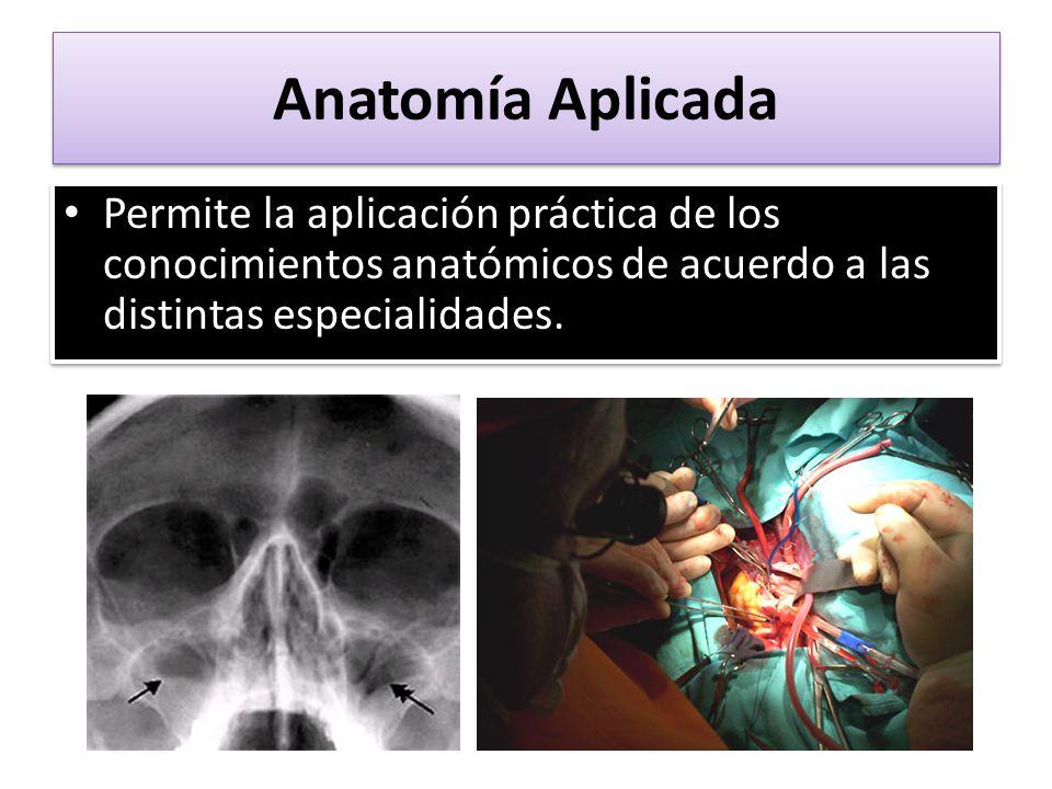 Atractivo Pruebas De La Práctica Anatomía Componente - Imágenes de ...