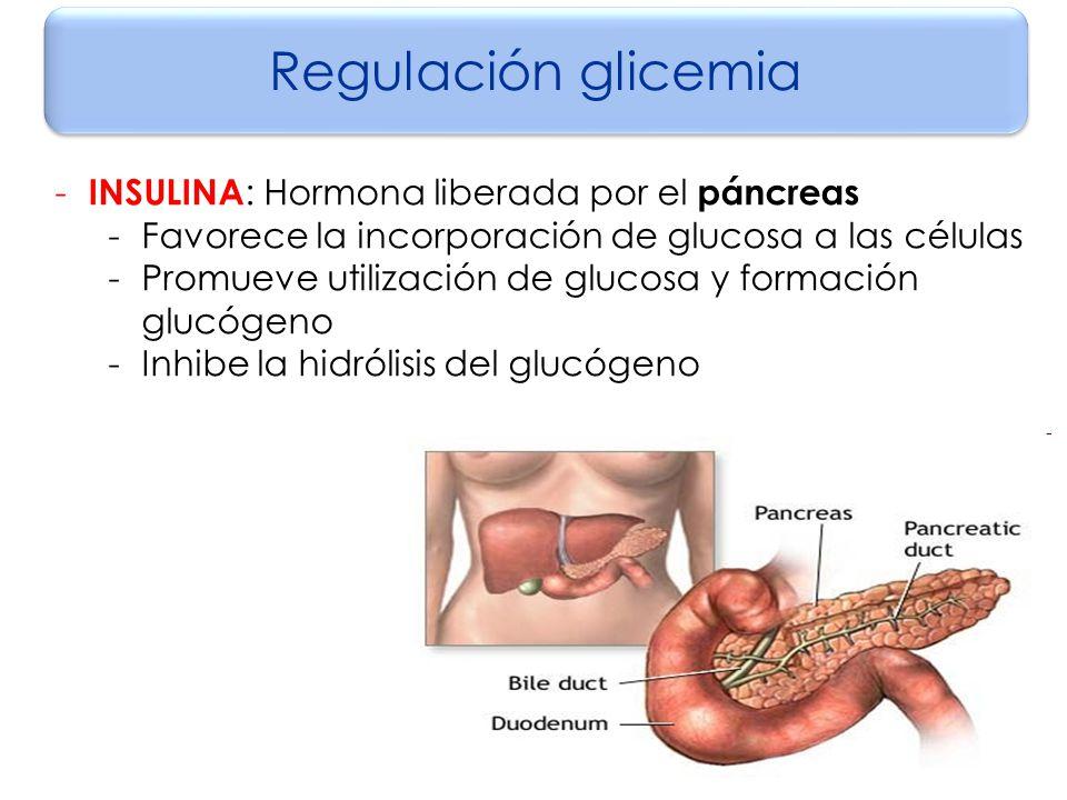 REGULACIÓN DE LA GLICEMIA - ppt descargar