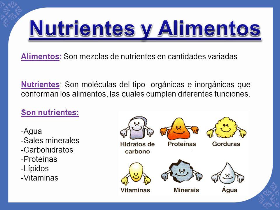 Nutrici n en el ser humano ppt video online descargar - Q alimentos son proteinas ...