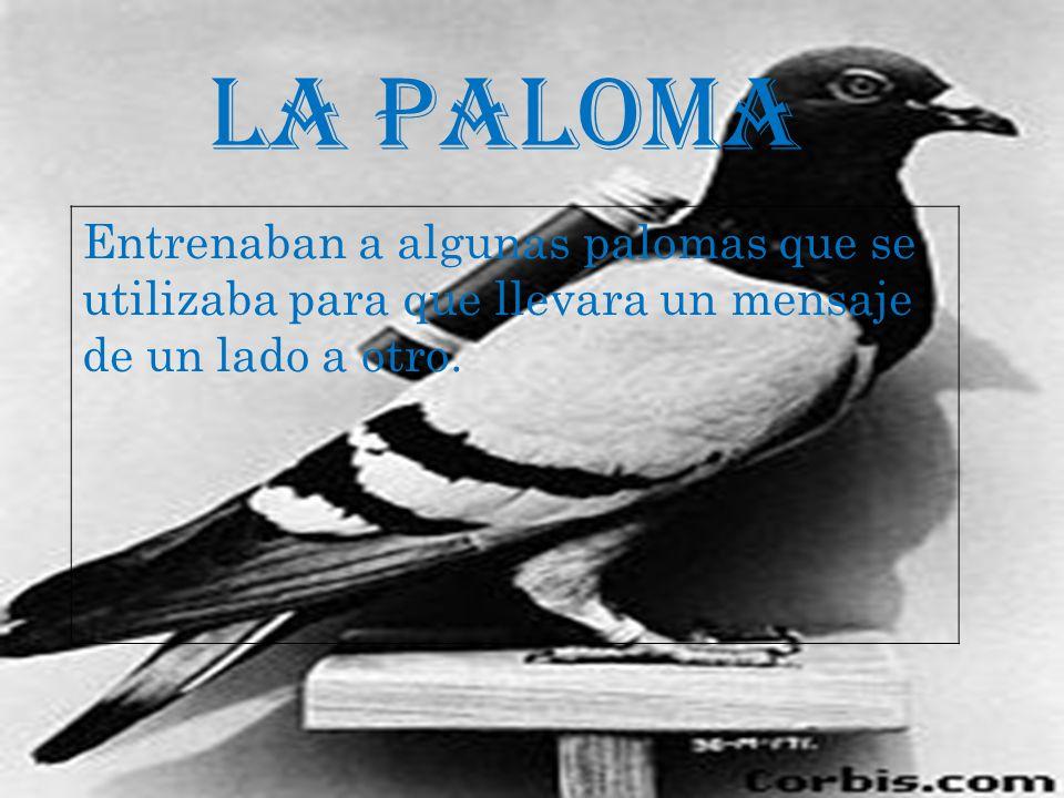 LA PALOMA Entrenaban a algunas palomas que se utilizaba para que llevara un mensaje de un lado a otro.