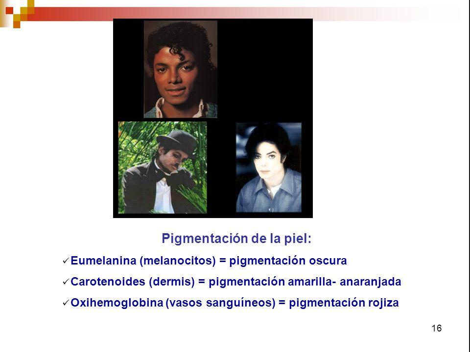 Pigmentación de la piel: