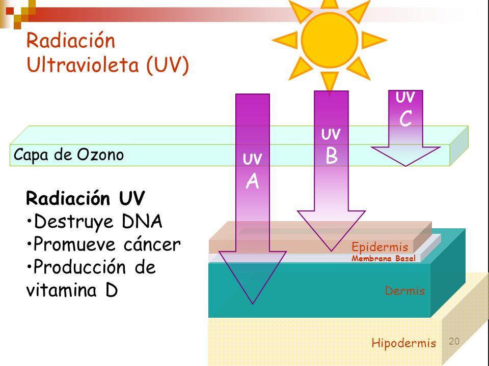 Radiación Ultravioleta (UV)