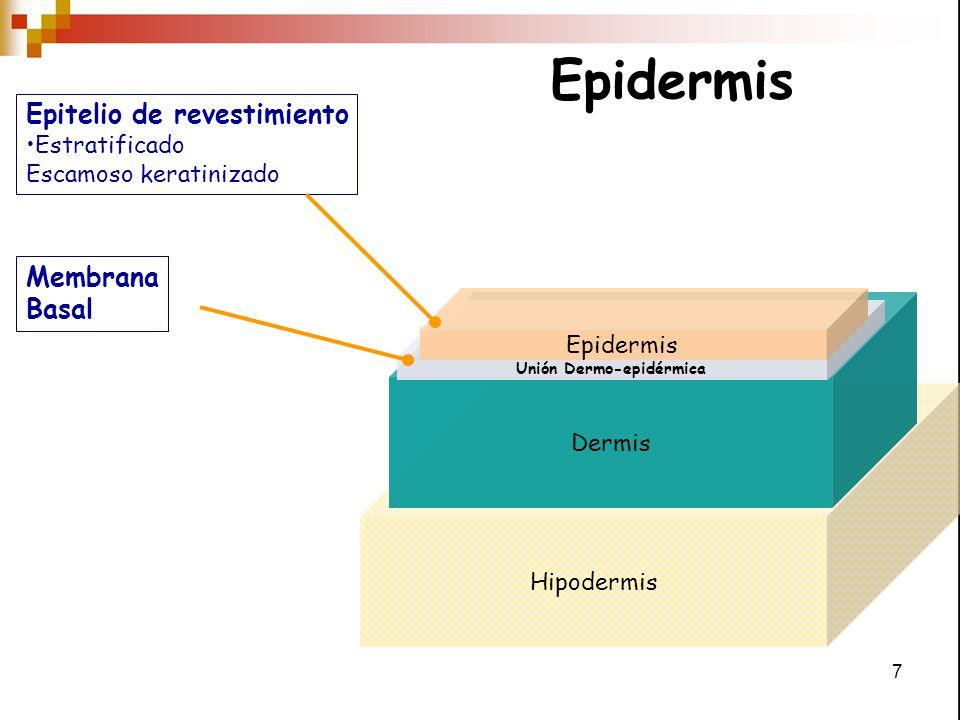 Unión Dermo-epidérmica