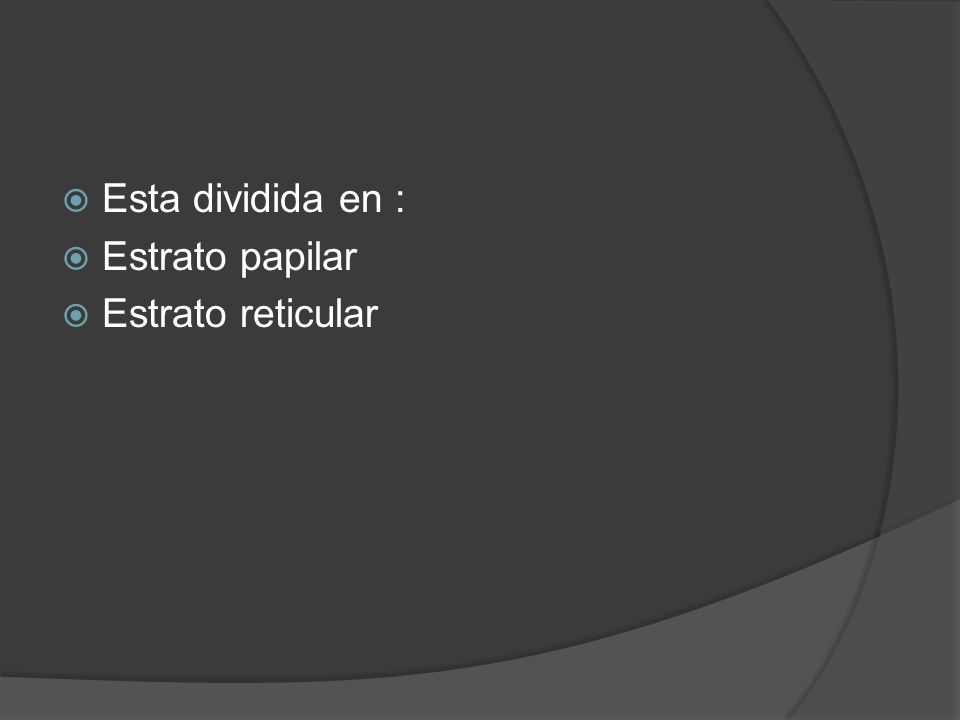Esta dividida en : Estrato papilar Estrato reticular