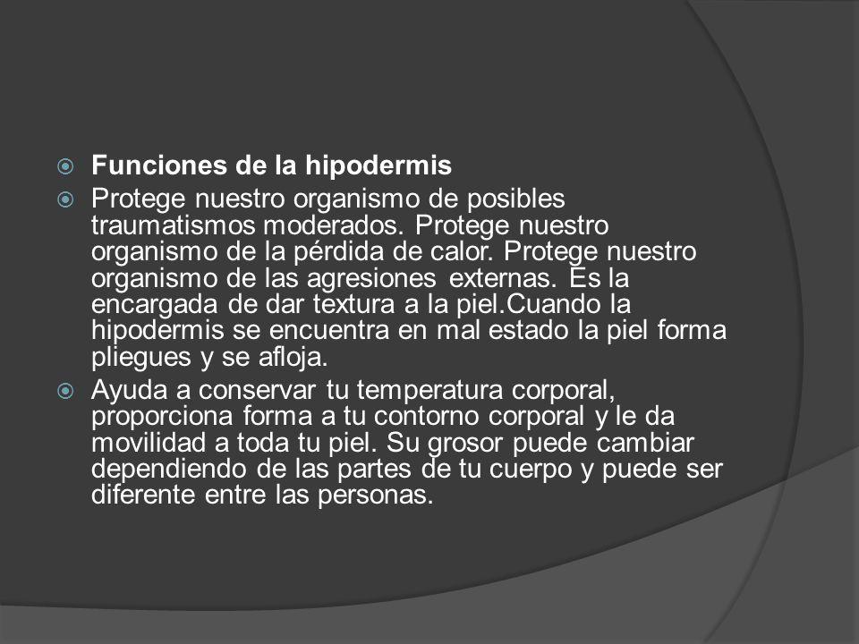 Funciones de la hipodermis