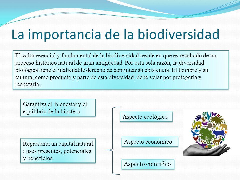Cual es la importancia de la biodiversidad en mexico for Importancia de la oficina wikipedia