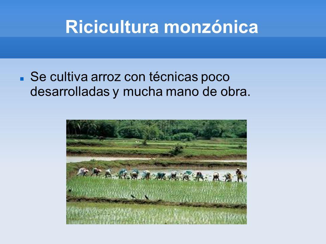 Ricicultura monzónica