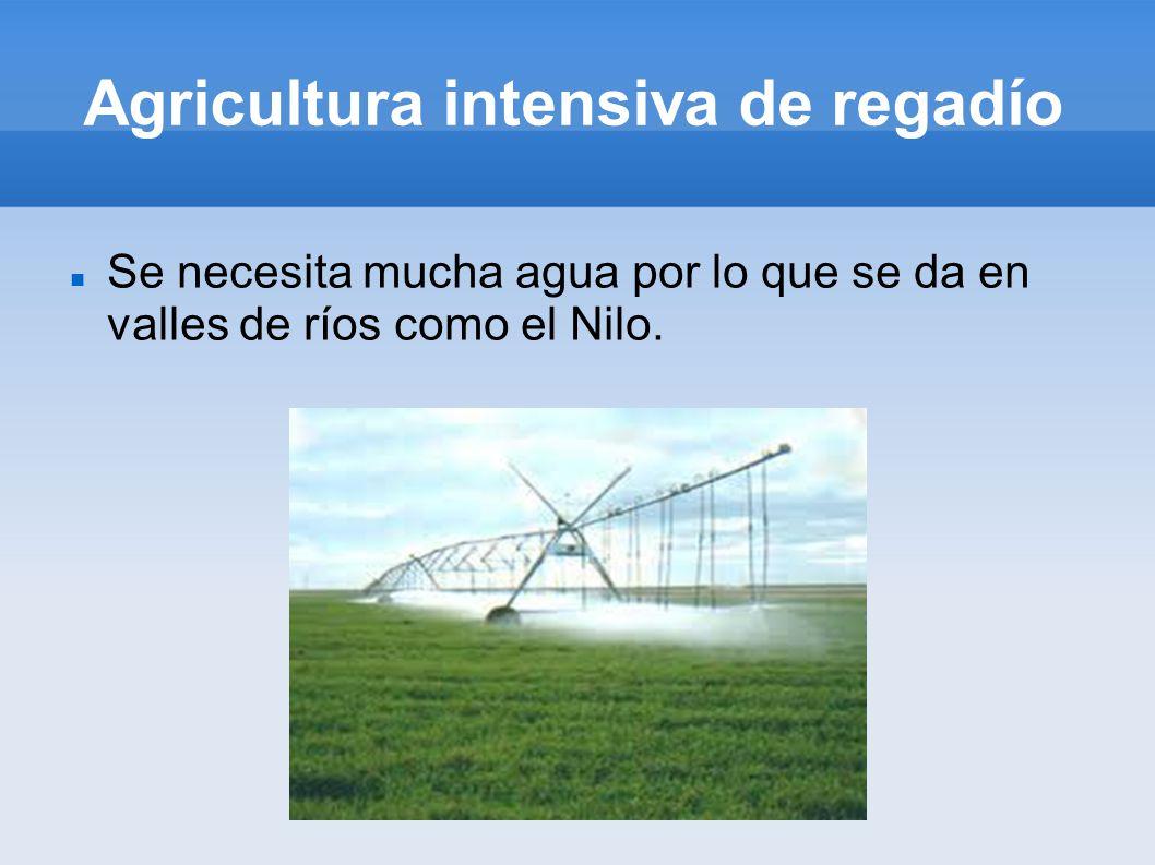 Agricultura intensiva de regadío
