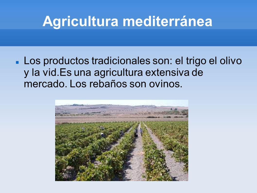 Agricultura mediterránea