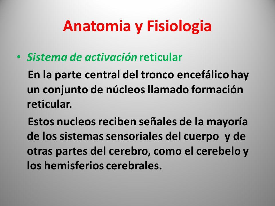 Dorable Sistema Sensorial Anatomía Y Fisiología De La Palabra De ...