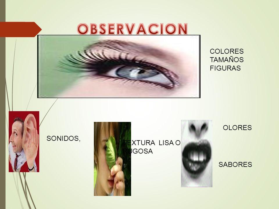 OBSERVACION COLORES TAMAÑOS FIGURAS OLORES SONIDOS,