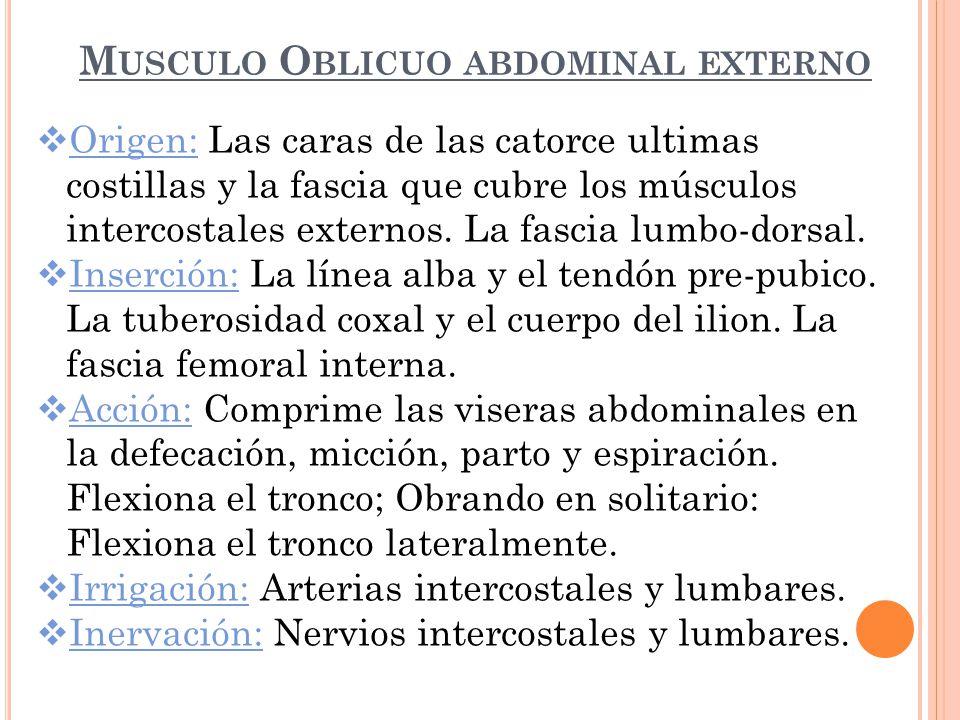Asombroso Donde Es El Músculo Oblicuo Imagen - Anatomía de Las ...