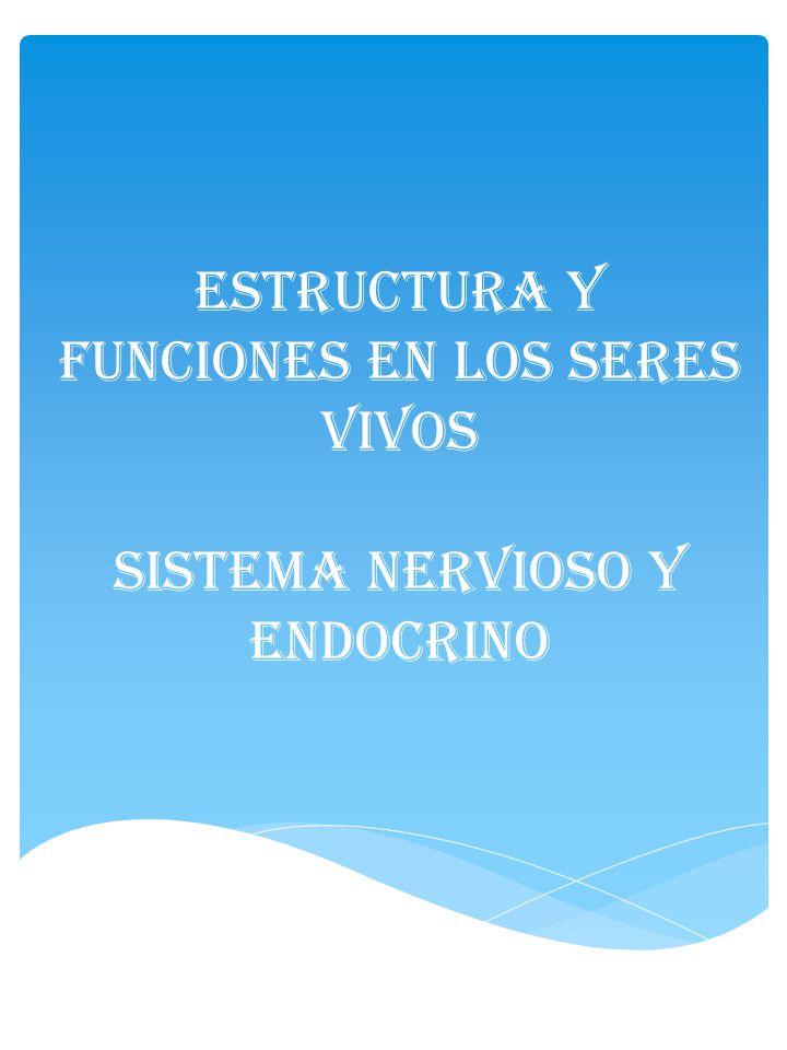 Estructura y funciones en los seres vivos ppt video online descargar - Estructuras libros vivos ...