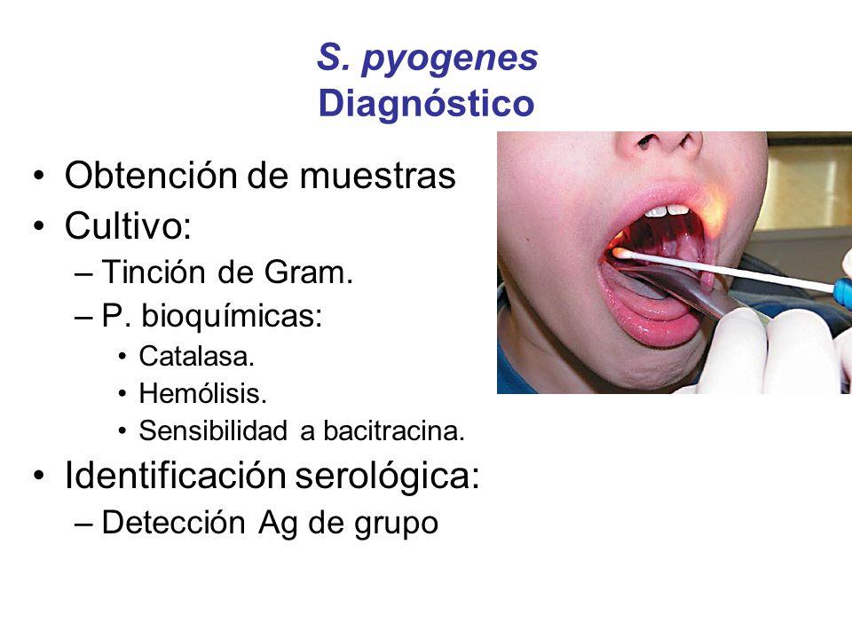 S. pyogenes Diagnóstico