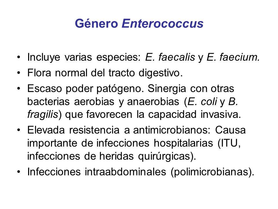 Género Enterococcus Incluye varias especies: E. faecalis y E. faecium.