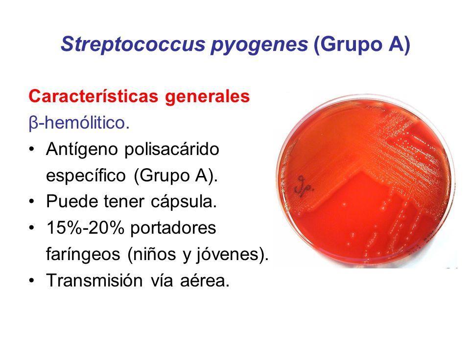 Streptococcus pyogenes (Grupo A)
