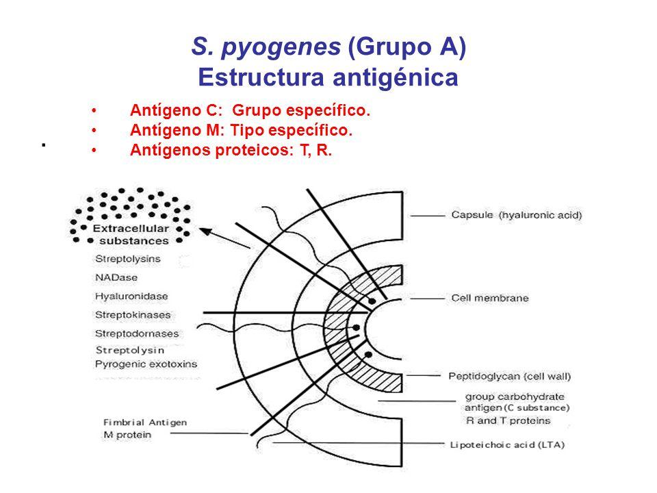 S. pyogenes (Grupo A) Estructura antigénica