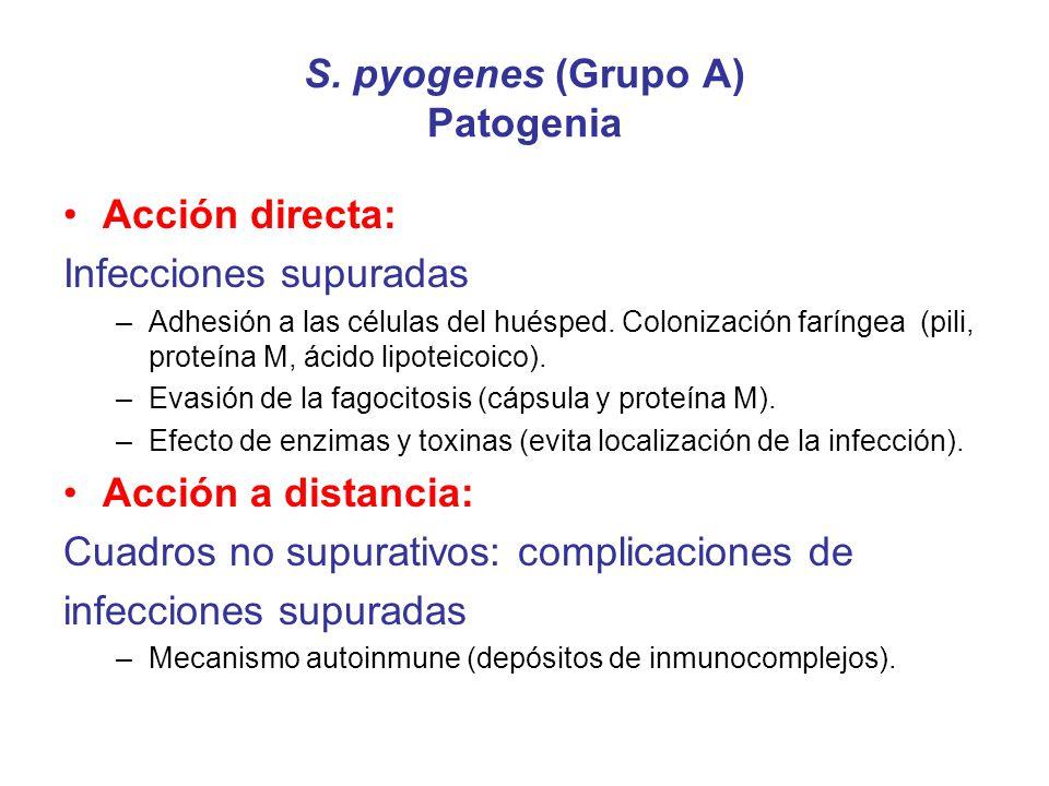 S. pyogenes (Grupo A) Patogenia