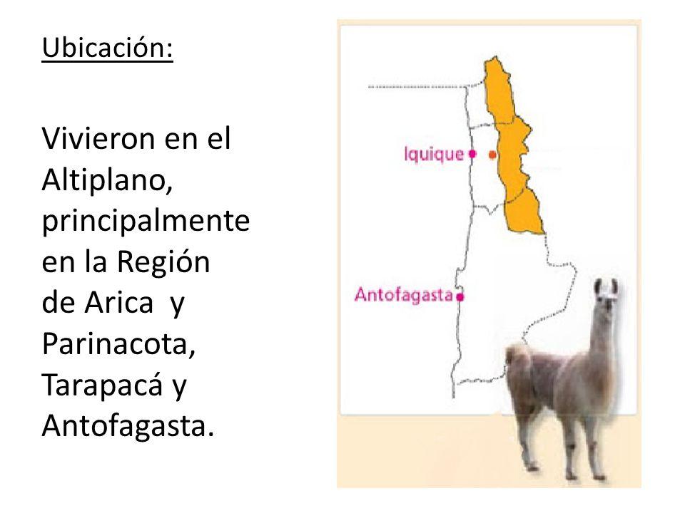 Ubicación: Vivieron en el Altiplano, principalmente en la Región de Arica y Parinacota, Tarapacá y Antofagasta.