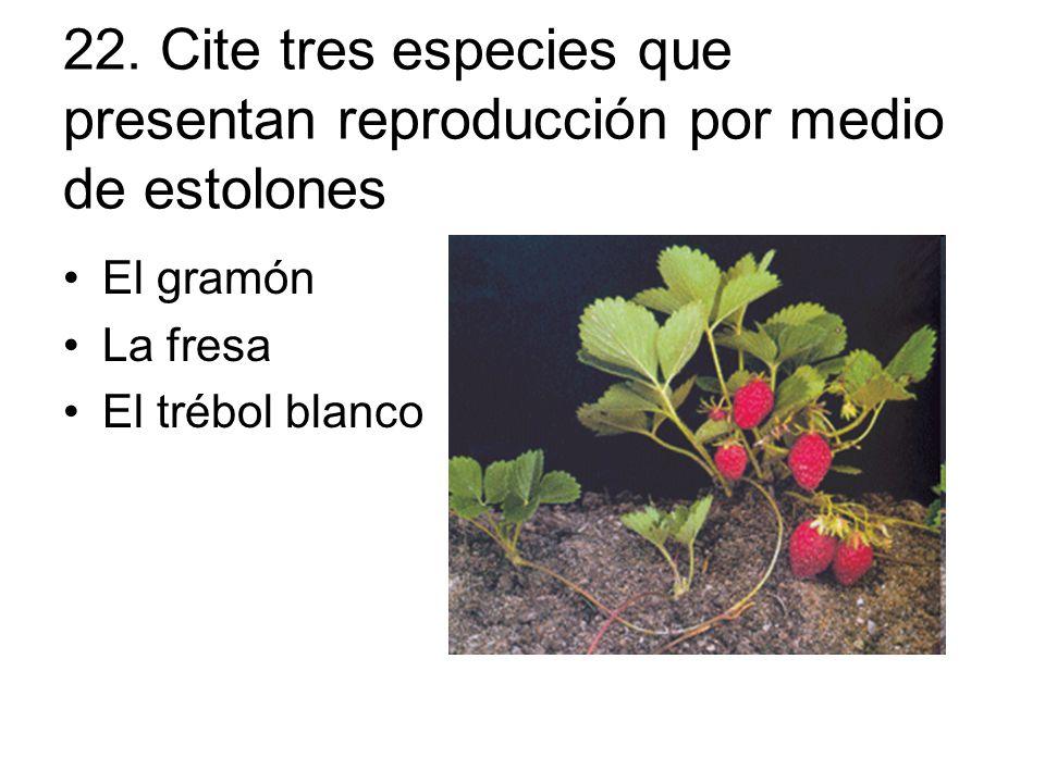 22. Cite tres especies que presentan reproducción por medio de ...