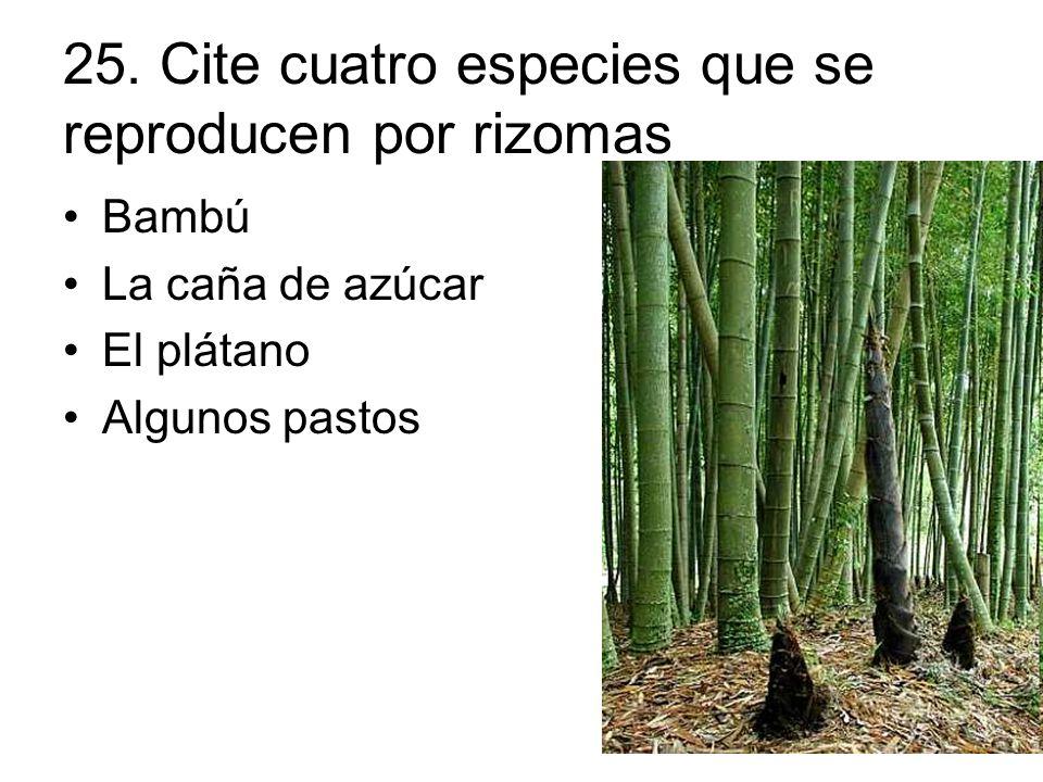 22 cite tres especies que presentan reproducci n por medio de estolones el gram n la fresa el - Como se planta el bambu ...