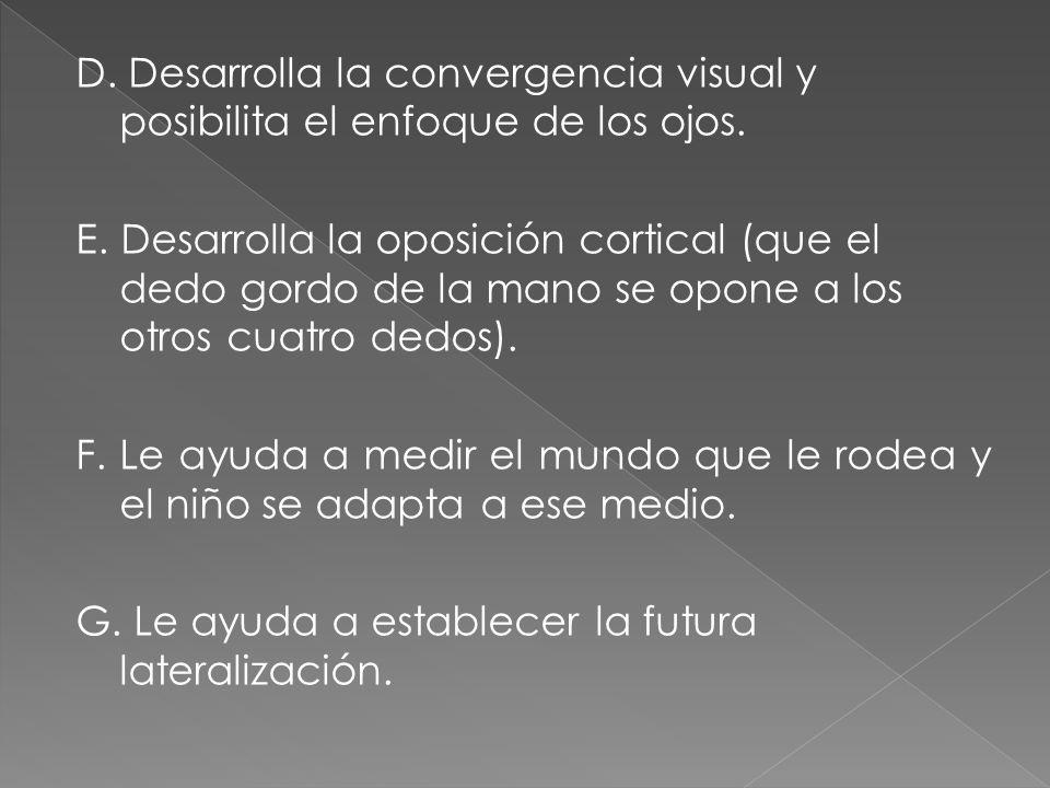 D. Desarrolla la convergencia visual y posibilita el enfoque de los ojos.