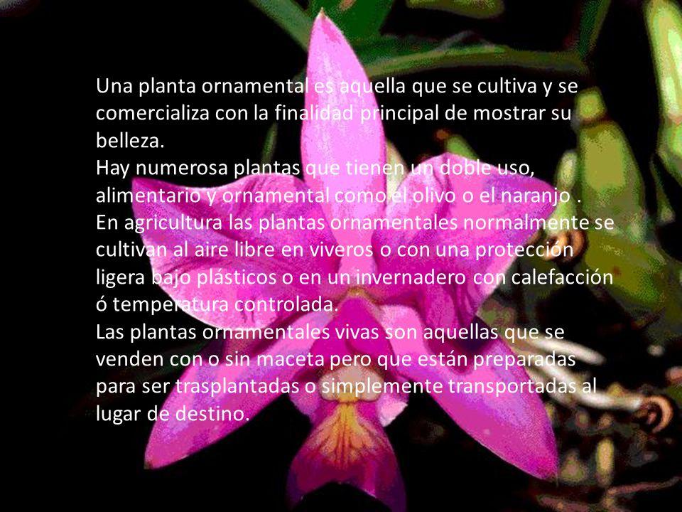 Integrantes mellany mosquera y sebasti n gonz lez tema for Que es un vivero de plantas ornamentales