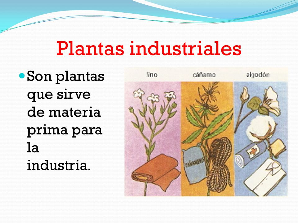 La maravilla de las plantas ppt video online descargar for Que son plantas ornamentales ejemplos