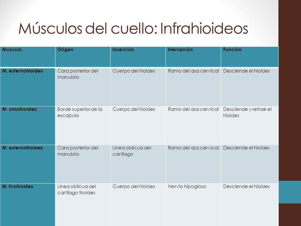 Fundamentos de anatom a ppt descargar for Esternohioideo y esternotiroideo