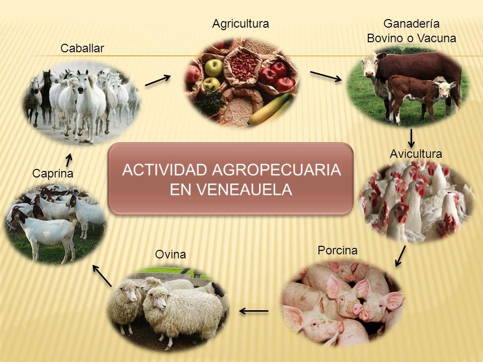 ACTIVIDAD AGROPECUARIA EN VENEAUELA