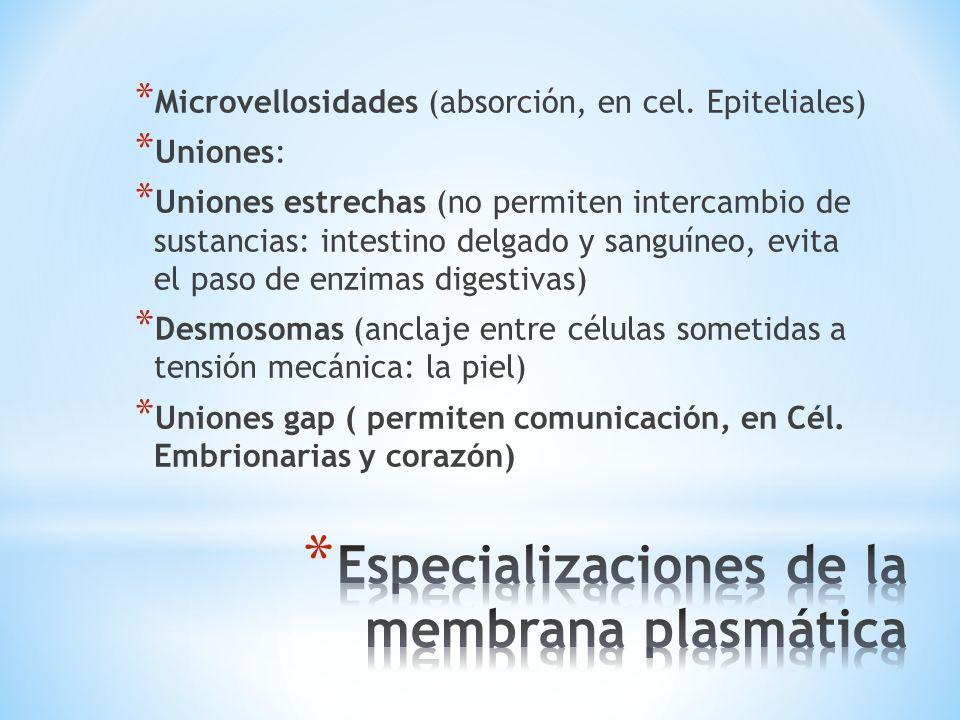 Especializaciones de la membrana plasmática