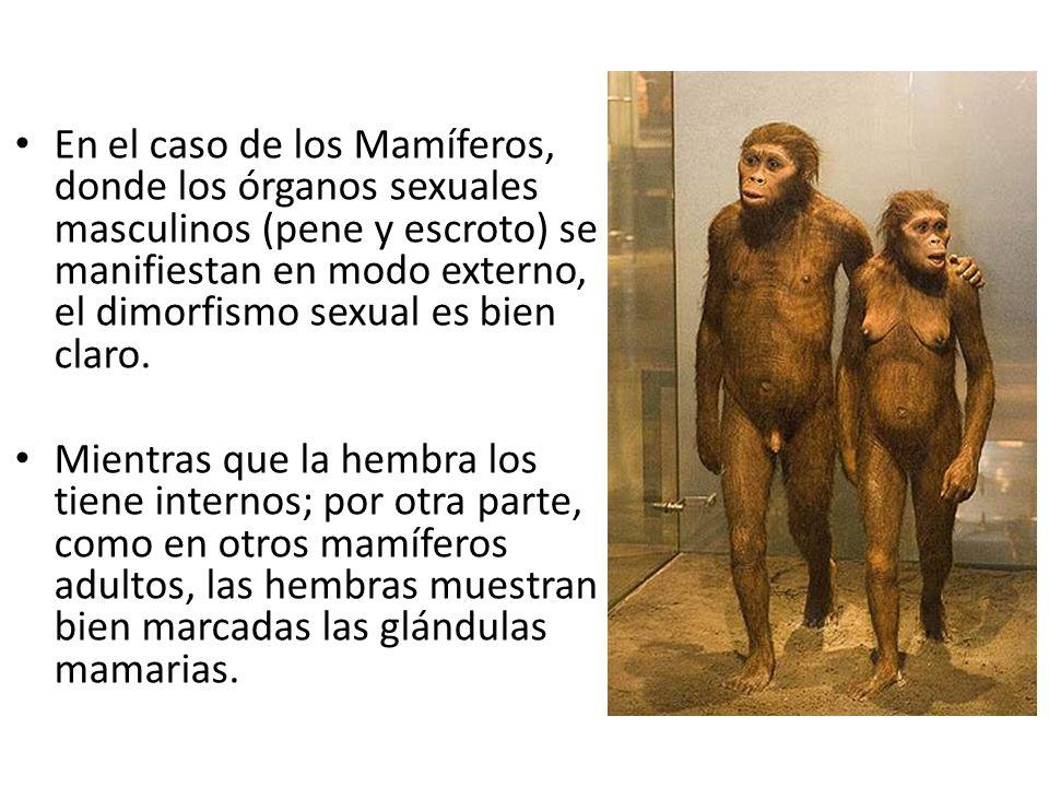 Moderno Imagen De Los órganos Internos De La Hembra Cresta ...