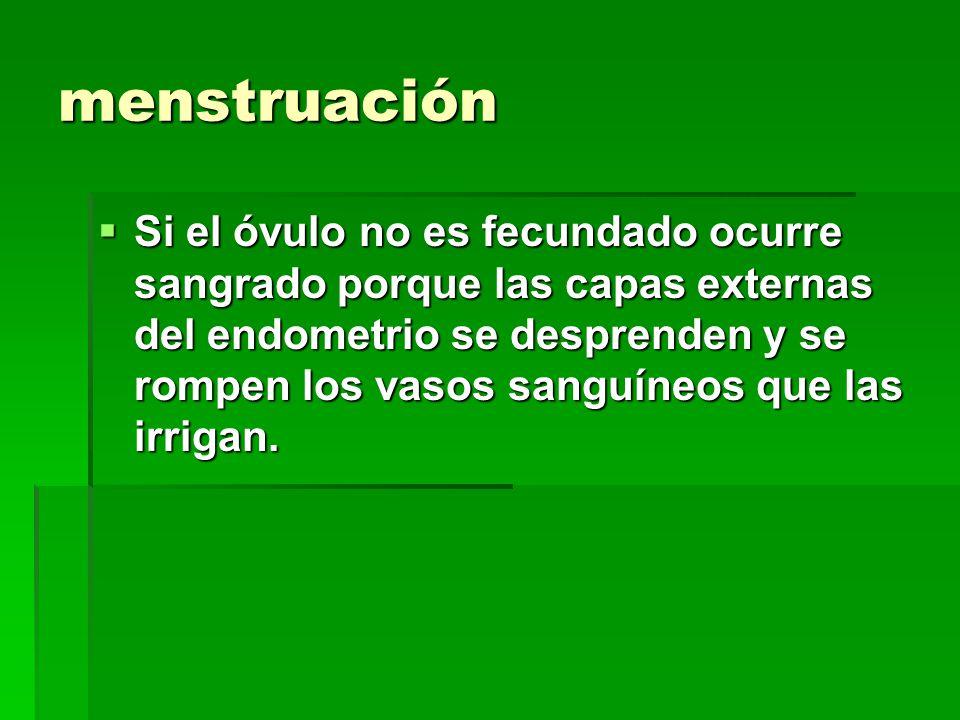 Sistema reproductor masculino y femenino ppt descargar for Vajillas que no se rompen