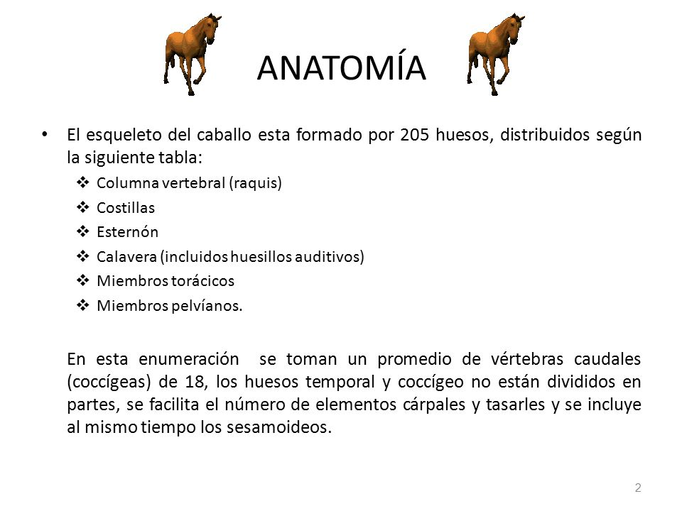 Contemporáneo Anatomía Esqueleto Caballo Galería - Anatomía de Las ...