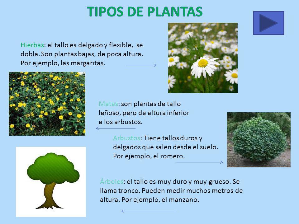 3 de primaria las plantas ppt video online descargar for Cuales son los tipos de arboles