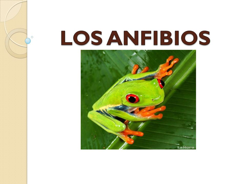 LOS ANFIBIOS. - ppt video online descargar