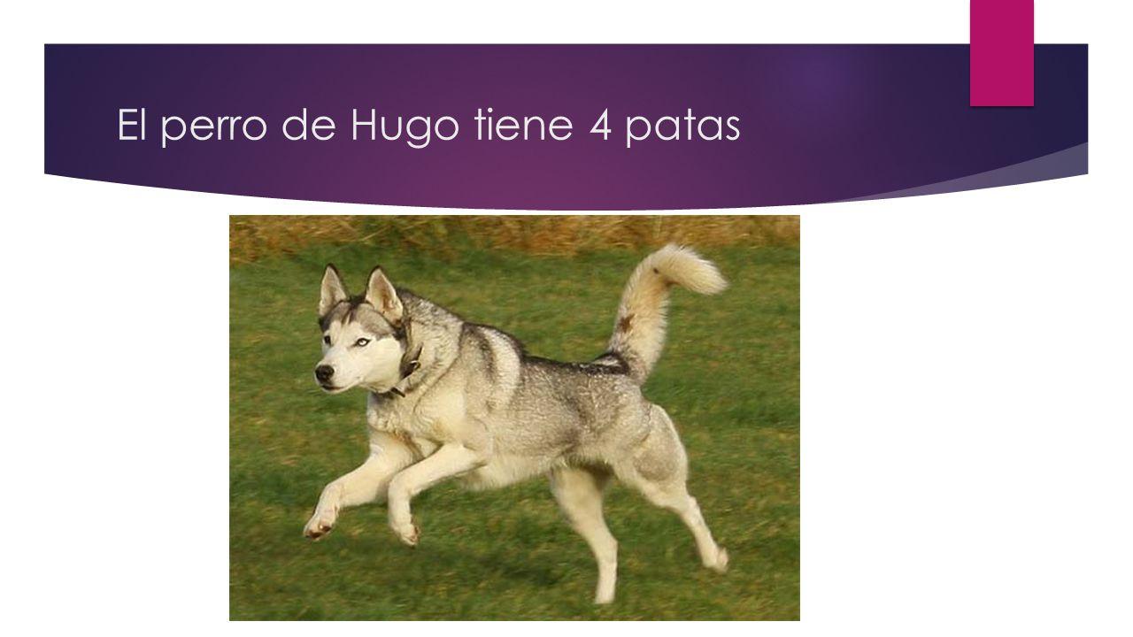 El perro de Hugo tiene 4 patas
