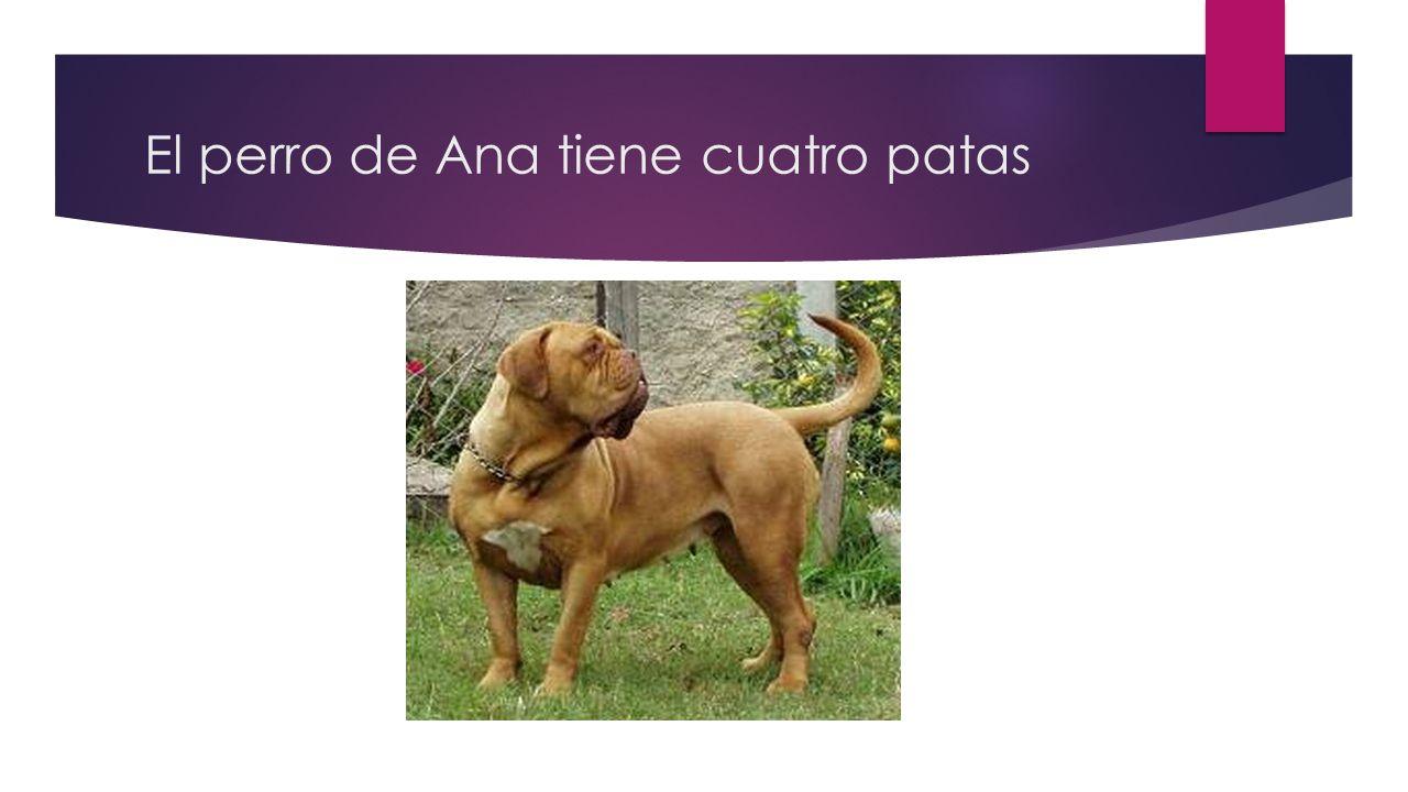 El perro de Ana tiene cuatro patas