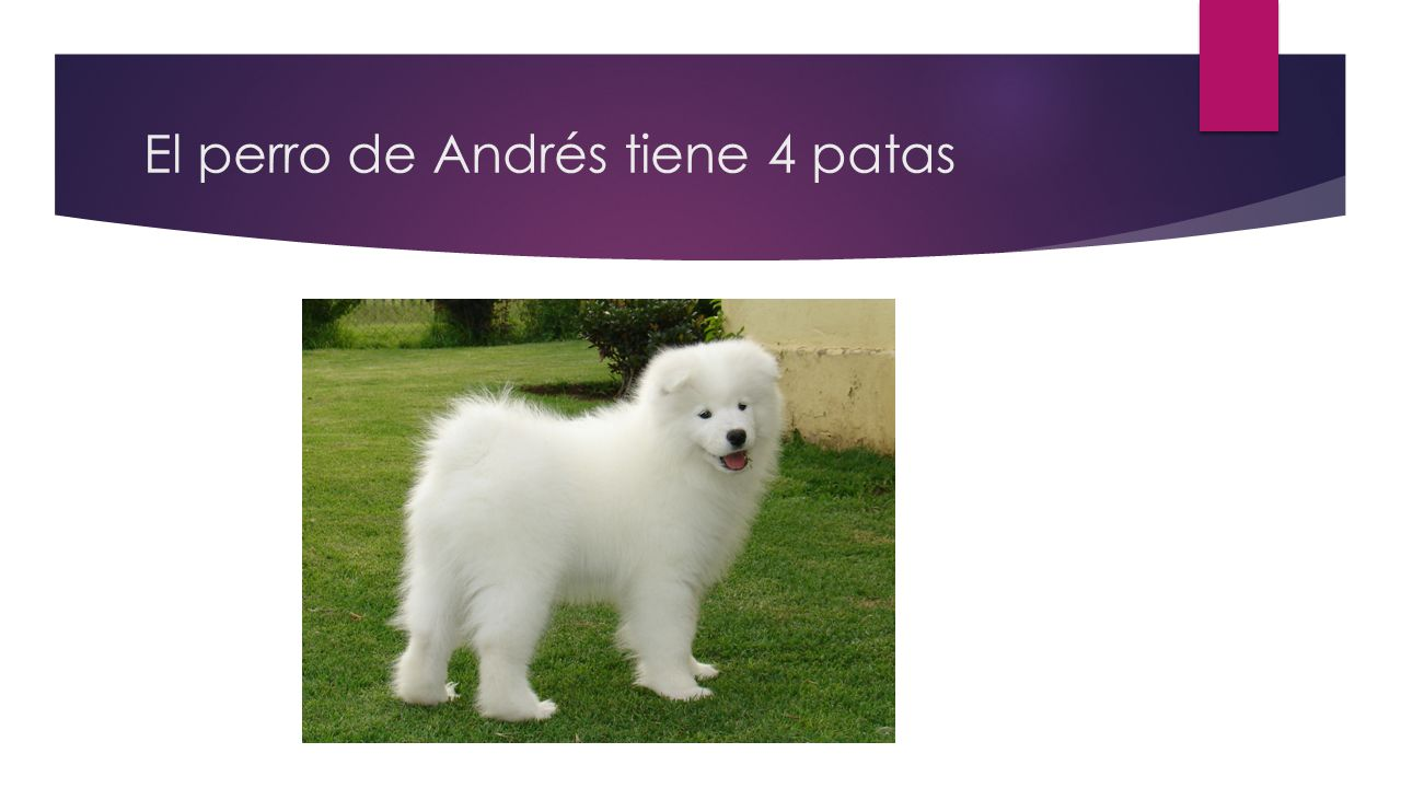 El perro de Andrés tiene 4 patas