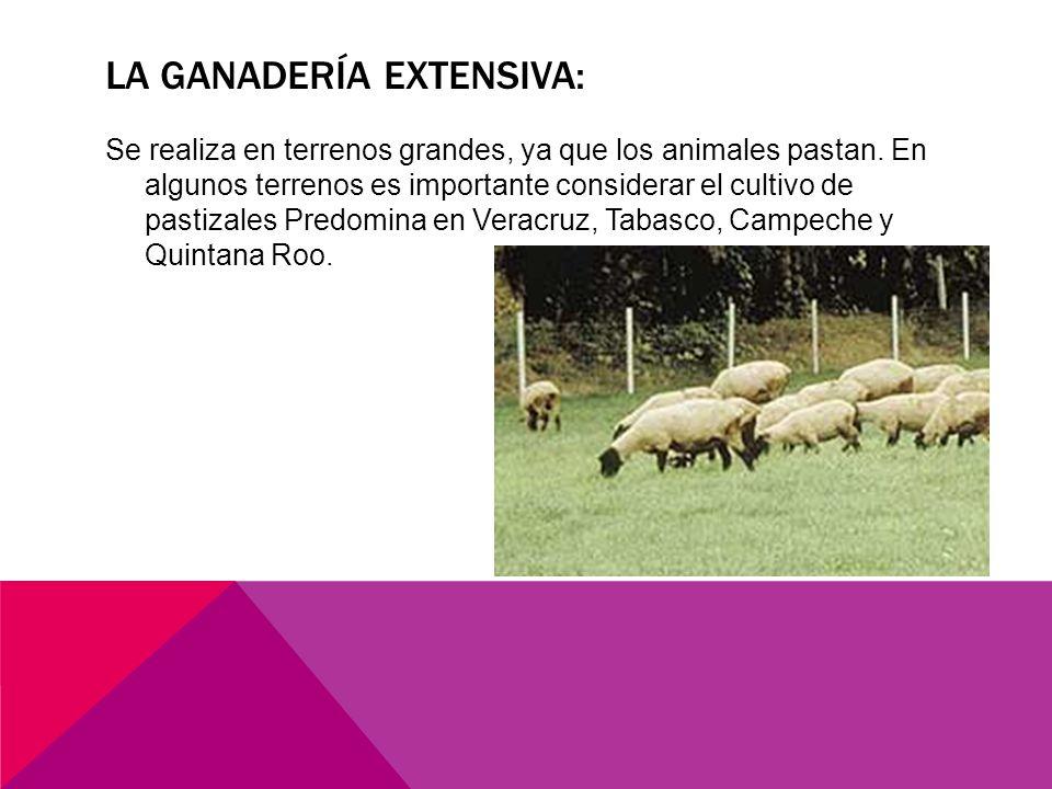 La ganadería extensiva: