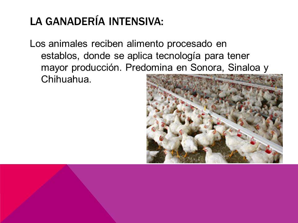 la ganadería intensiva: