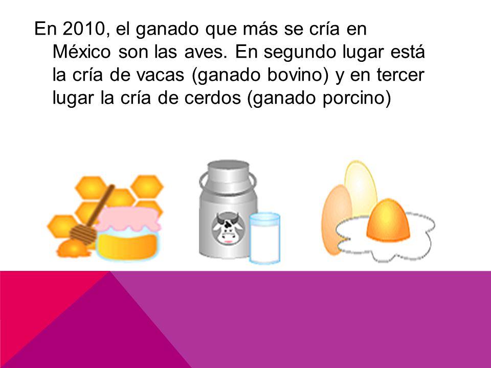 En 2010, el ganado que más se cría en México son las aves