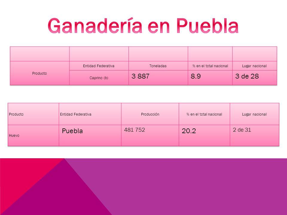 Ganadería en Puebla 3 887 8.9 3 de 28 Puebla 20.2 481 752 2 de 31