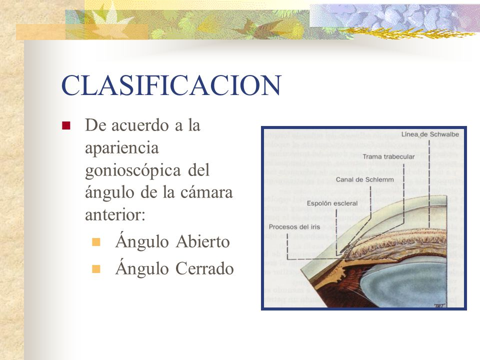 Atractivo Anatomía ángulo Sinodural Motivo - Imágenes de Anatomía ...