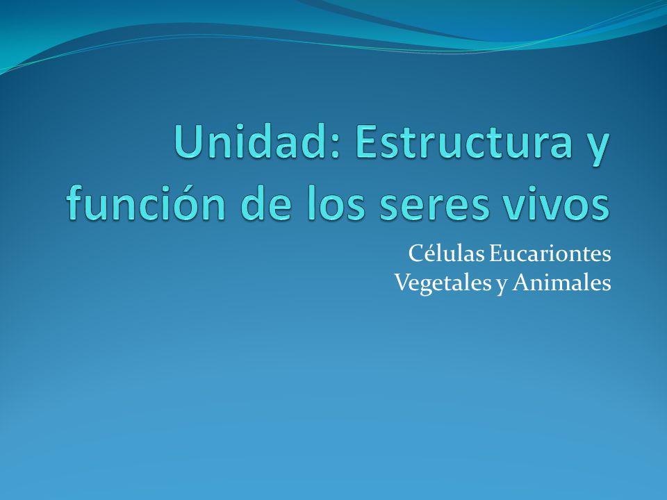 Unidad estructura y funci n de los seres vivos ppt descargar - Estructuras libros vivos ...