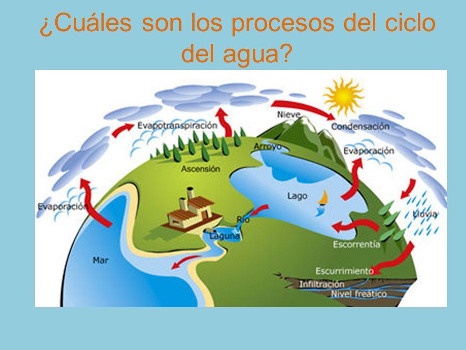 ¿Cuáles son los procesos del ciclo del agua
