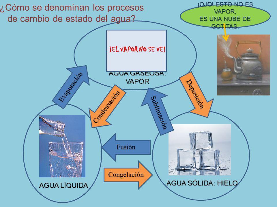 ¿Cómo se denominan los procesos de cambio de estado del agua