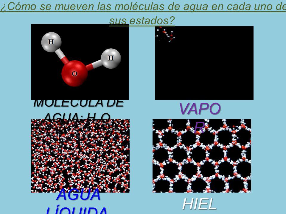 ¿Cómo se mueven las moléculas de agua en cada uno de sus estados